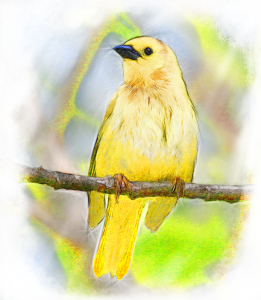 golden-songbird-color-lg