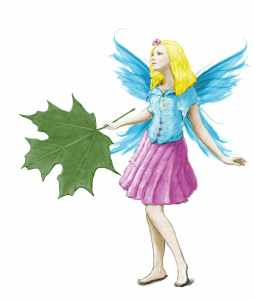 f-suger-maple-fairy-with-leaf-color_sm